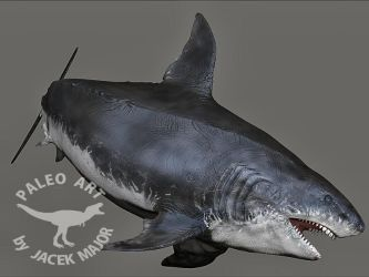 Megalodon by A2812