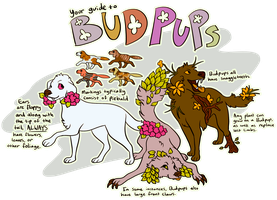 Your Guide To BUDPUPS by edelilah