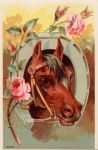 Show Pony - Roses by Yesterdays-Paper