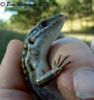 Little Skink II by BreeSpawn