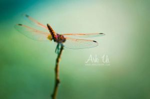 Delicate by Arkus83