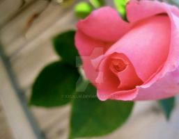 Roses really rock by xxLiLLiE