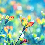 Colors of Spring by incolor16
