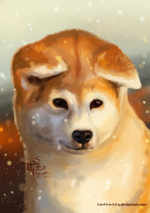 Akita Inu by 1NFIN1TY