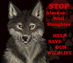STOP Alaskan Wolf Slaughter by KichisCrafts