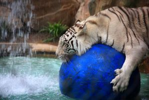 Stock: Tiger Watersports by Celem