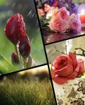 Flowers and Nature Collection Wallpapers 2018 by fisabilillah