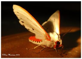 Red Tipped Moth by BreeSpawn