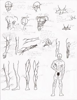 Muscle Anatomy by Facepalmmaster