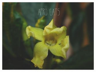 The Afro Cats Proyect by skamelda