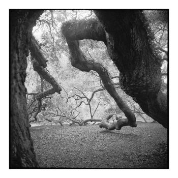 2015-006 Angel Oak - shoulders and elbows by pearwood