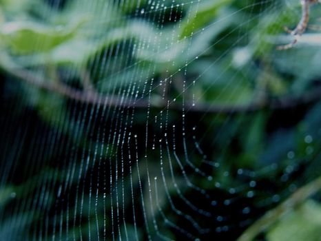 Spider web 4 by mrscats