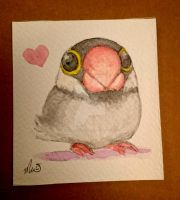chibi Java Sparrow by Marshmalloworld629