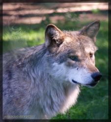 Wolfess portrait by Lougaria