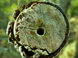 The eye of the branch by Nana1293