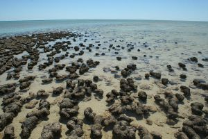 Stromatolites by lunacyfreak