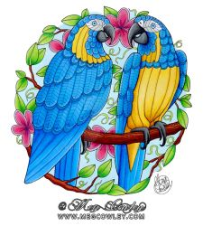 Blue Throated Macaw (The Exotic Colouring Book) by megcowley