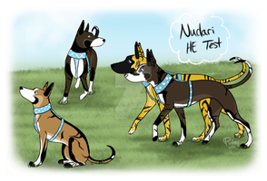 Nudari Harness Exam Titles - HazelPatchKennels by prettypinkey2