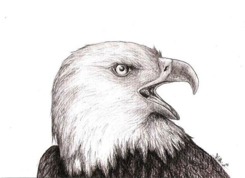Eagle by Qyiet195