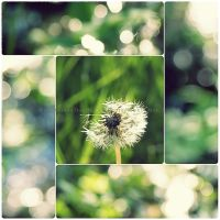 Wishes With M a g i c a l Bokeh by GrotesqueDarling13
