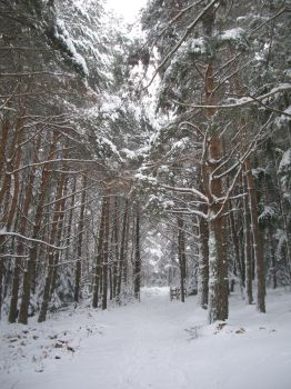 neige en foret by thelongblondhair