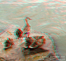 Family Anaglyph 3D by Osipenkov