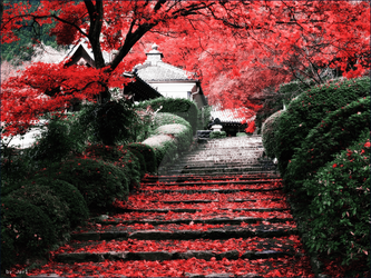 Japan with small HDR and More by Jay1pl