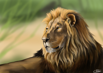 Lion by PineapplesHaveFeet