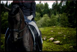 Black Dressage by MollyMay335