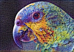 Parrot by quintessency