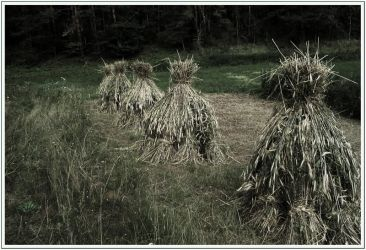 hay stacks by qdave
