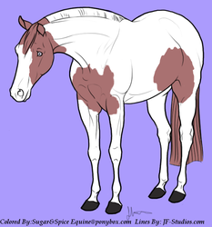 Paint Horse by MollyMay335