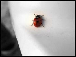 Miss Lady-Bug by DyaNothing by BrailaCity