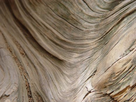 Wood Texture 2 by melstock