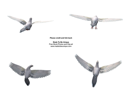 Different dove flying poses by madetobeunique