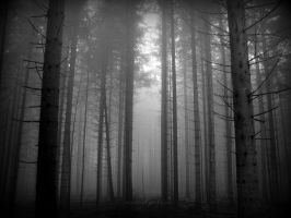 world of silence by deadforest17