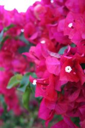 Red Flowers by HaMaSeR