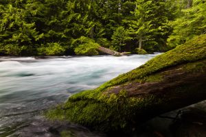 Mckenzie River 2 by mofig