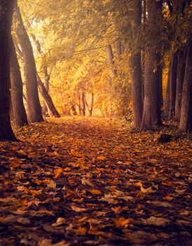 The autumn path by streamweb