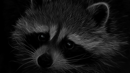 Racoon by nogrox