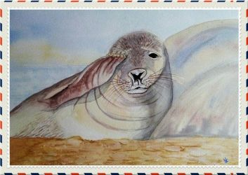 Seal Pup by Supach