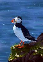 Atlantic Puffin by Mellodee