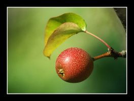 pear by chinlop