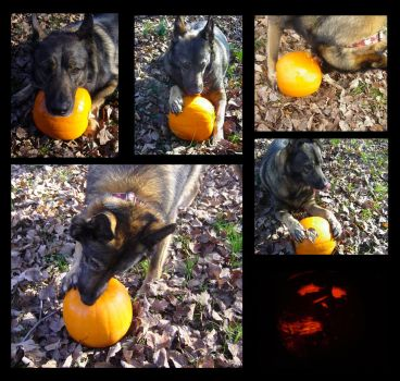 Pumpkin Carving for Dogs by scarlet-dahlia
