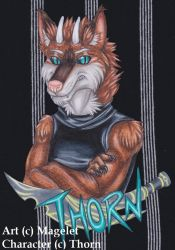 Thorn Conbadge Commission by Magelet