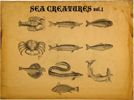 Sea Creatures by motion-suggests