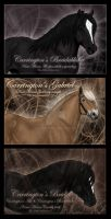North Swedish horses by Jullelin