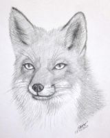 Red Fox by mariapalitos68