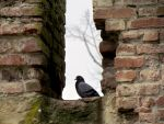 Another Bird In the Wall by Sasa-Van-Goth