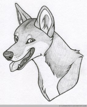 Adrastos the Dingo by FlannMoriath